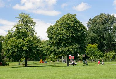 Trees in Bury Meadow