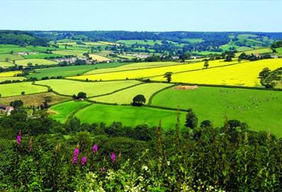 East Devon countryside