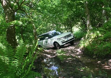 Range rover in the woods