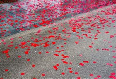 Poppies in the road