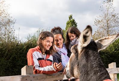 Family enjoys meeting donkey