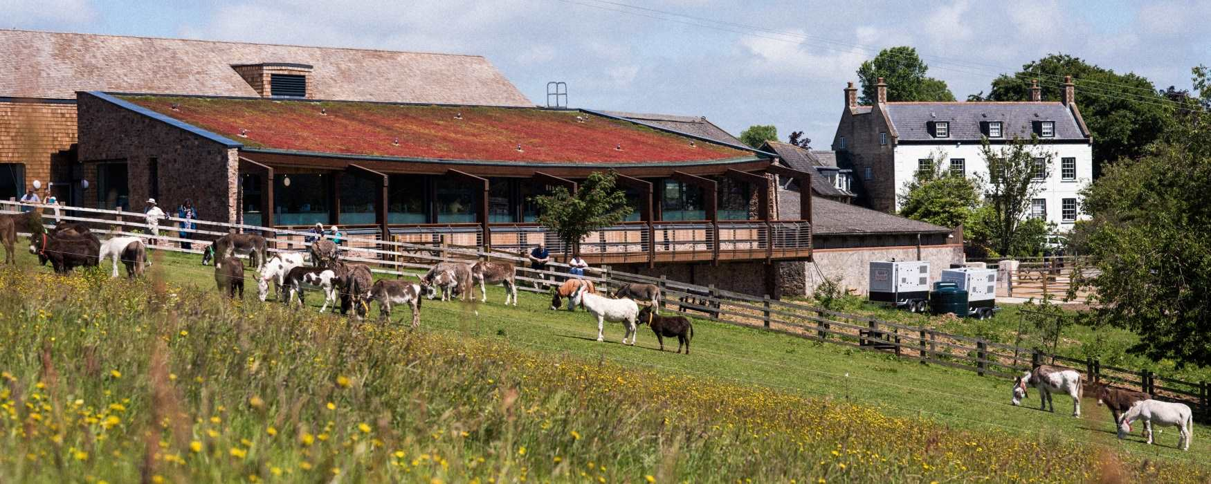 Family fun at the Donkey Sanctuary