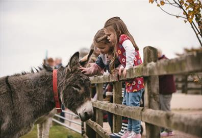 Stroking a donkey at the Donkey Sanctuary