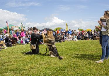 Spring Family Fun Day and Dog Show at The Donkey Sanctuary