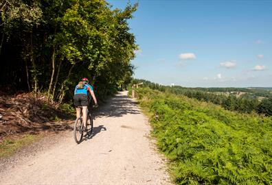 Haldon Forest Cycle Trails