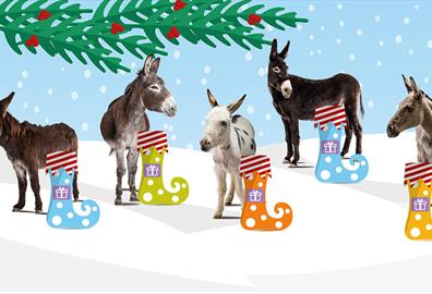 5 adoption donkeys with their Christmas stockings