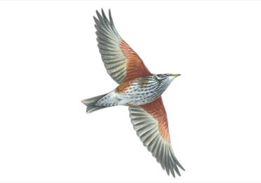 Birds of Exeter: autumn guided walk