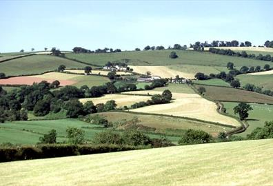 Exe Valley