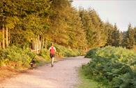Haldon Forest Park - Forestry Commission - running with dog