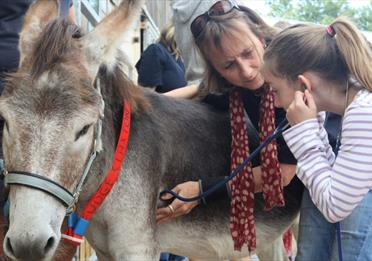 Child examines a donkey during Junior Vet Day