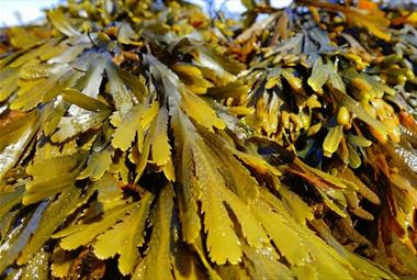 Sensational seaweed weekend