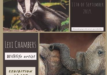 Art Exhibition: Lexi Chambers Wildlife