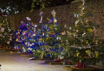 Charity Christmas Trees in Princesshay Switch-on